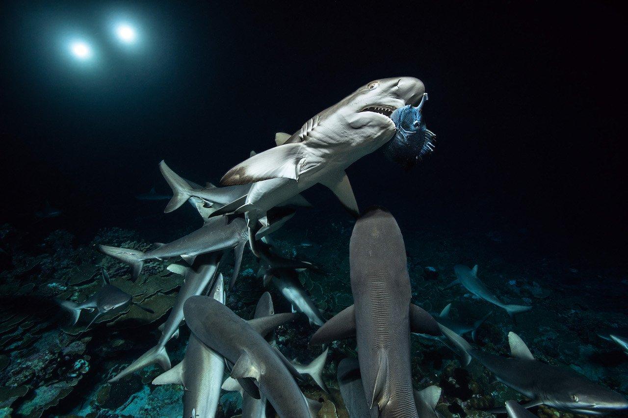 700 squali